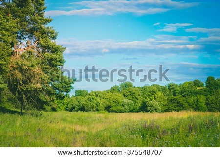 sky and meadow with a tree in the summer  - stock photo