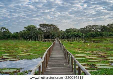 Skyline and river with Victoria Regias and footbridge with blurred tourists in Brazilian Panantal wetlands - stock photo