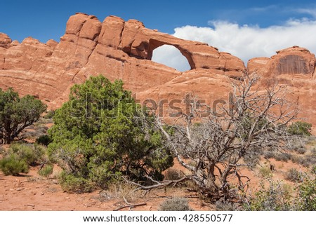 Skyline Arch and dry trees in Arches National Park, Utah, USA - stock photo