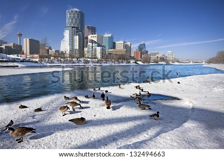 Skyline of Calgary, Alberta, Canada  Geese playing in the shadows of Bridge Bow River partly covered with Snow and Ice. Picture taken March 8, 2013 - stock photo