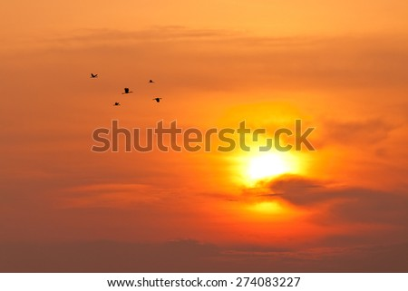 Skyscape view of twilight sun and group of silhouetted birds - stock photo