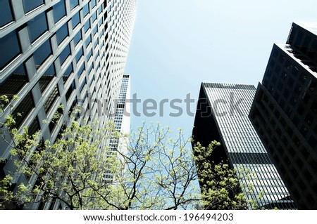 Skyscrapers and a tree under a clear blue sky. - stock photo
