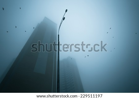 Skyscrapers at early foggy morning in the city district. Ravens flying over.  - stock photo