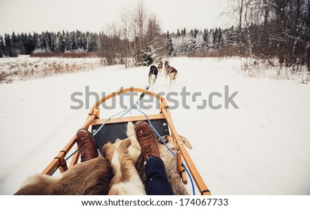 Sled dogs pulling a sled through the winter forest in Central Finland - stock photo