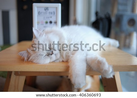 Sleep cat, Cat relaxing on table, Furry cat sleep happily - stock photo