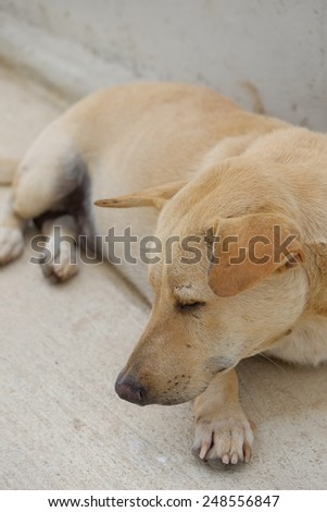 sleep dog, emotional face. - stock photo