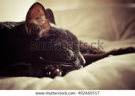 Sleeping black cat, toned image with selective focus on cat's nose - stock photo