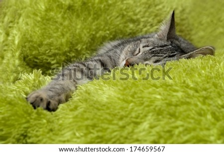 Sleeping cat on a sofa, sleeping cat face close up, small sleepy lazy cat, sleeping kitten, sleepy cat close up, animals, domestic cat, relaxing cat in green background  - stock photo