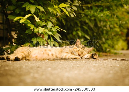 Sleeping cat vintage retro - stock photo