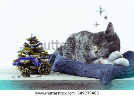 Sleeping cat with pine cone as New year tree concept composition - stock photo