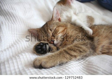 Sleeping cats - stock photo