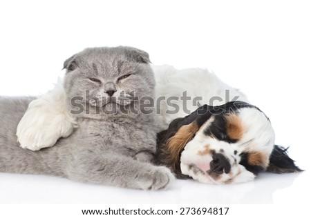 Sleeping Cocker Spaniel  puppy hugs cat. isolated on white background - stock photo