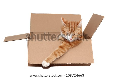 sleeping cute tomcat in removal box - stock photo