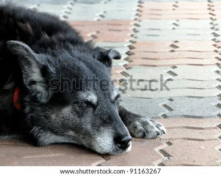 Sleeping Dog - stock photo