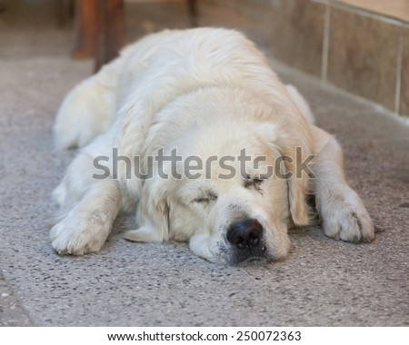 Sleeping Dog - Kas, Antalya Province, Turkey, Asia - stock photo