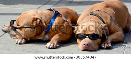 Sleeping dogs wear sunglasses - stock photo