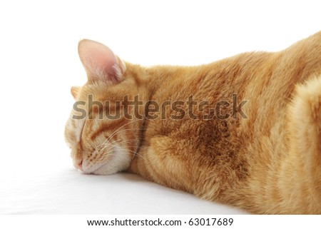 Sleeping Ginger Cat - stock photo