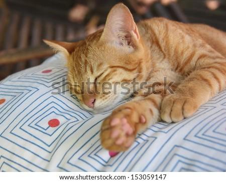 Sleeping ginger kitten - stock photo