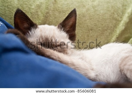 Sleeping kitten with blanket - stock photo