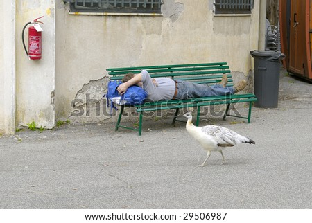 Sleeping man in zoo - stock photo