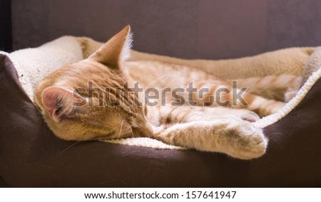 Sleeping orange cat in cat bed - stock photo