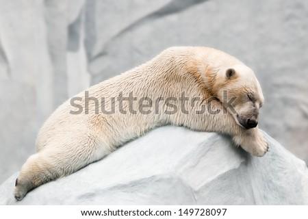 Sleeping polar bear - stock photo