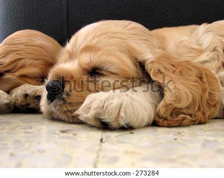 sleeping puppies - stock photo