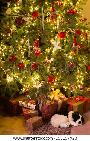 Sleeping puppy and presents under the christmas tree - stock photo
