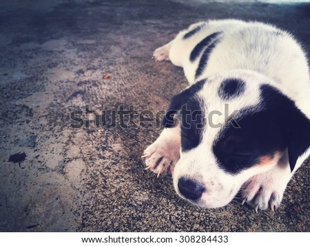 sleeping puppy with retro filter effect and space for your background  - stock photo