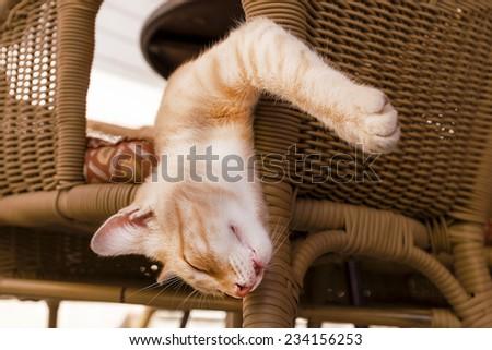 sleeping red cat - stock photo