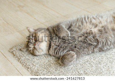 Sleeping red cat on carpet at indoor - stock photo