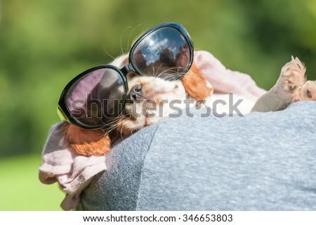 sleeping spaniel puppy wearing sunglasses - stock photo