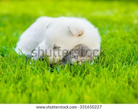 sleeping White Swiss Shepherd`s puppy hugging small kitten on green grass - stock photo