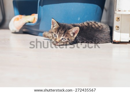 Sleepy baby kitten lying down to rest on the floor alongside its bed with a drowsy expression, low angle with copyspace - stock photo