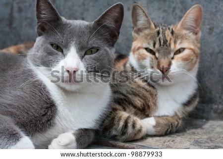 sleepy cats portait - stock photo