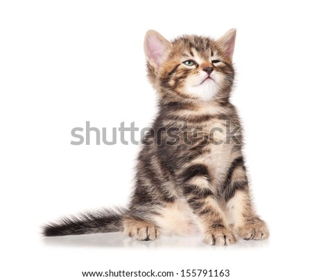 Sleepy funny kitten isolated on a white background - stock photo