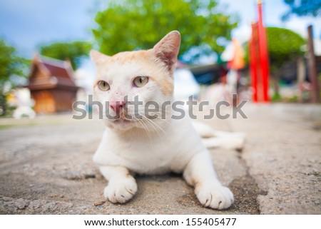 Sleepy grey and white cat enjoying the sunshine on street - stock photo