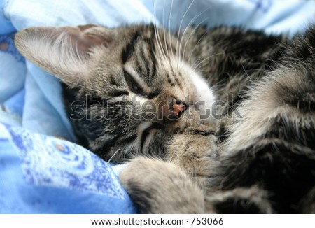 Sleepy kitten on soft bed - stock photo