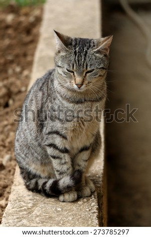 Sleepy tabby cat sitting on the wall in the garden. Natural light, vertical format, selective focus. - stock photo