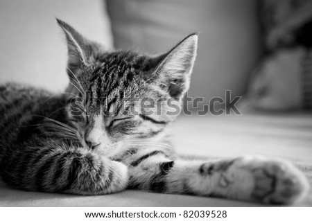 sleepy young cat - stock photo