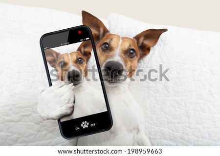sleepyhead dog taking a selfie while in bed - stock photo