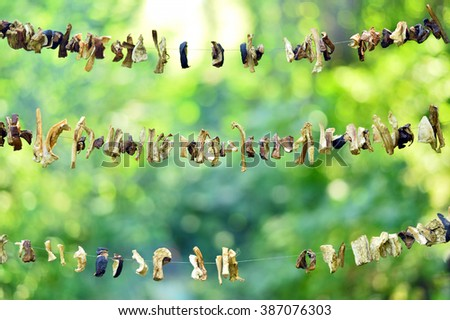 Sliced mushrooms are dried in the open air in the campaign. - stock photo