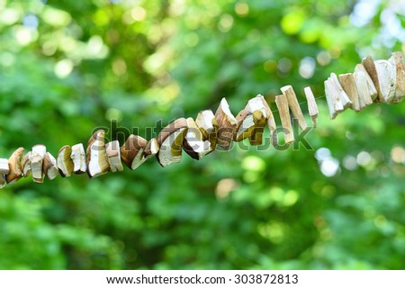 Sliced mushrooms are dried on a string against a background of green foliagehite. - stock photo