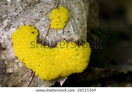 Slime molds (Myxomycota sp.) - stock photo