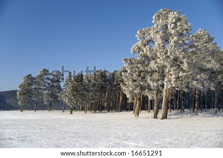 Slope of a mountain. A tree in snow on a background of the light-blue sky. - stock photo