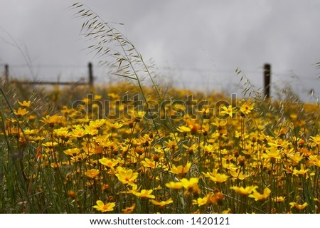 Slope of the hill covered with colorful spring flowers and the old fence in the background - stock photo
