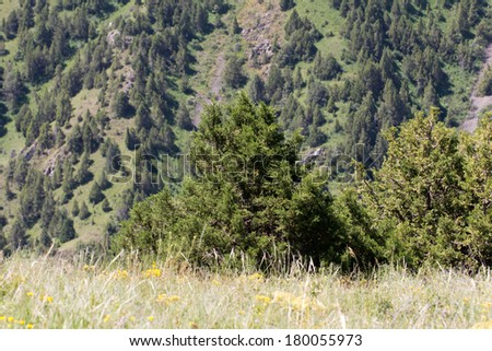 slopes of the mountains with trees in Kazakhstan - stock photo