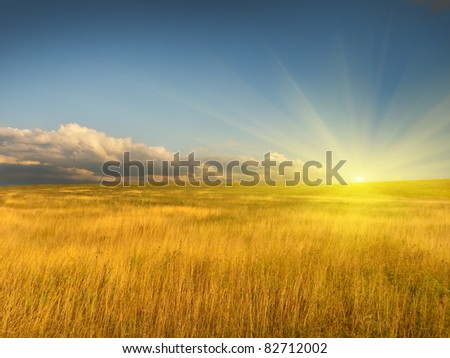 sloping field of wheat. natural composition - stock photo