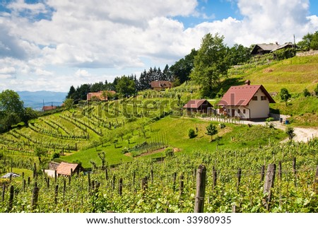 slovenia vineyard in summer with little village houses - stock photo