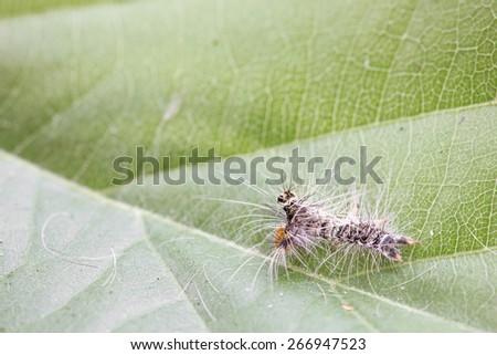 Slug worm on leaves. - stock photo